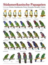 Südamerikanische papageien (Zuid Amerikaanse papegaaien)