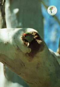 1995 nr.06 Juni