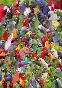 papegaaienkoppen