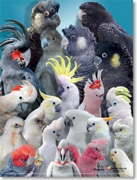 kaketoekoppen