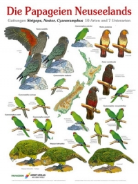 Die Papageien Neuseelands (Nieuw-Zeeland)