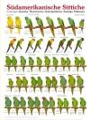 Südamerikanische Sittiche (Zuid Amerikaanse parkieten)